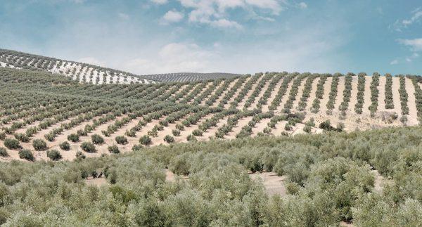 Entorno Aceite de oliva virgen extra