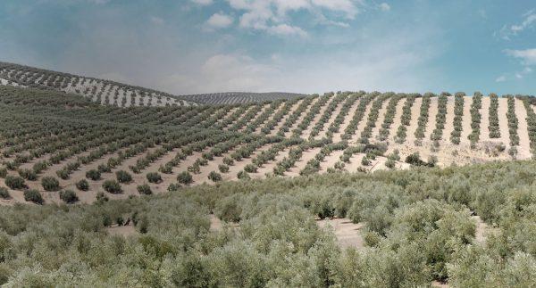 Entorno Aceite de oliva